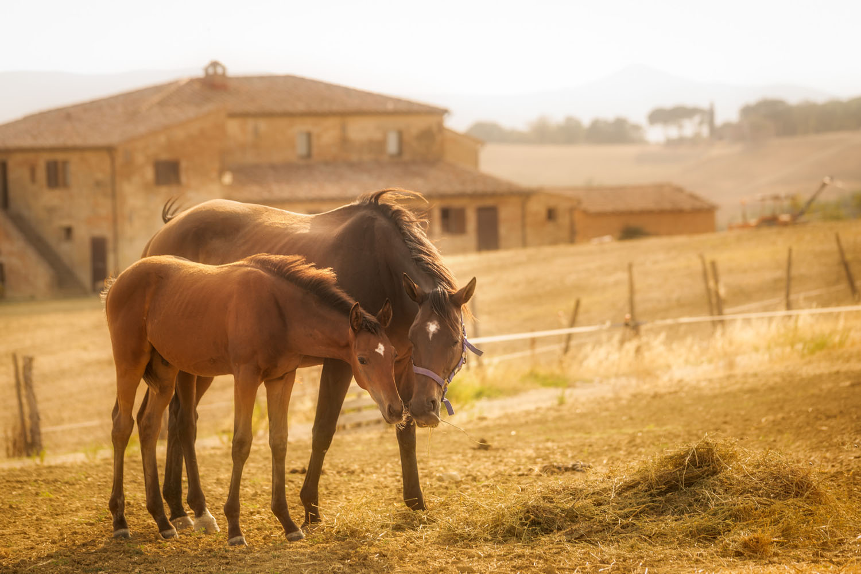 Pet friendly Farm Holidays - Tuscany